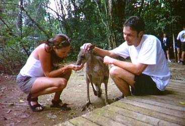 Feeding a kangaroo, Daintree National Park