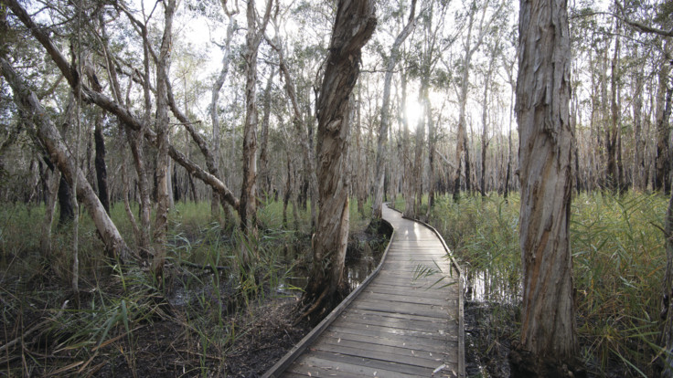Banksia Walking Track, Burrum Coast National Park