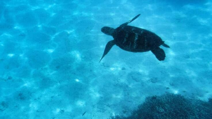 Snorkel with Turtles from 1770  - Private Charter Reef Trip