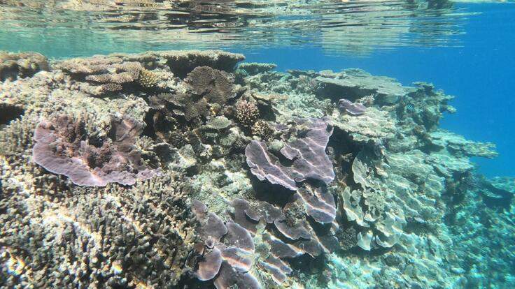 Snorkel Tours Seventeen Seventy - Colourful Corals on the Great Barrier Reef