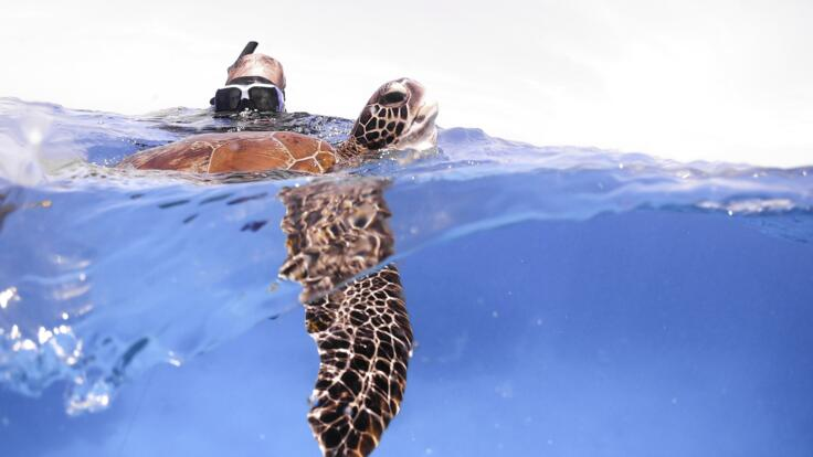 Fishing Tours Agnes Water - Snorkel with Turtles