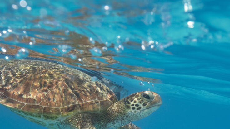 Pancake Creek Tours - Snorkel with Turtles