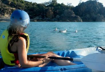 Experience the wildlife on 1770 Nature Kayaking Tour