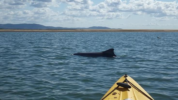Spot dolphins and wildlife on this 1770 Sunset Kayak Tour