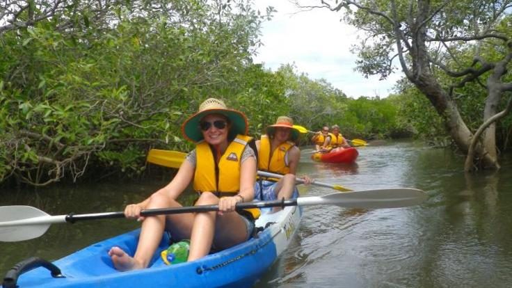 Explore the mangroves on 1770 kayaking nature tour