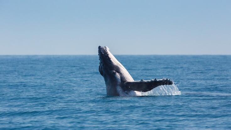 Lady Musgrave Island Tours - See Humpback Whales June to September