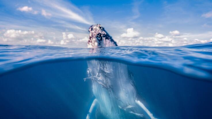 Lady Musgrave Island snorkel tour | See Humpback Whales June to September