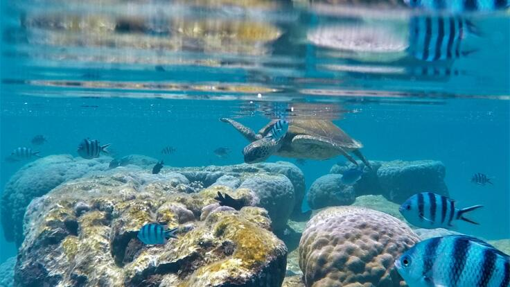 Lady Musgrave Island Tours - Snorkel with Turtles