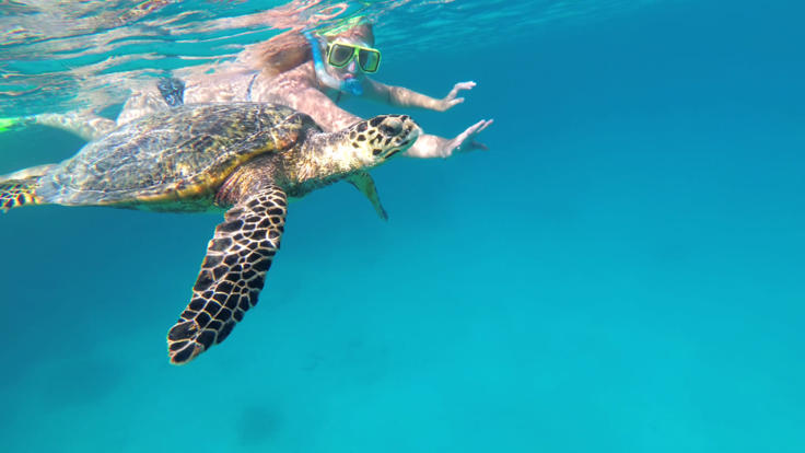 Snorkeller with turtle in Lady Musgrave Island Lagoon