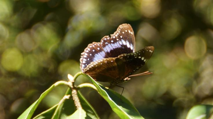 Butterfly | Half Day Airlie Beach Tour