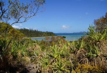 Beautiful scenery on this half day Airlie Beach walking tour