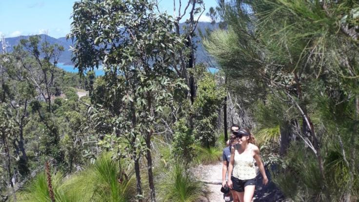 Airlie Beach Half Day Walking  Tour