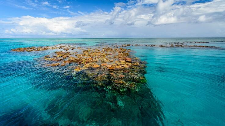 Dive and snorkel tours from Townsville & Msgentic Island - coral reef