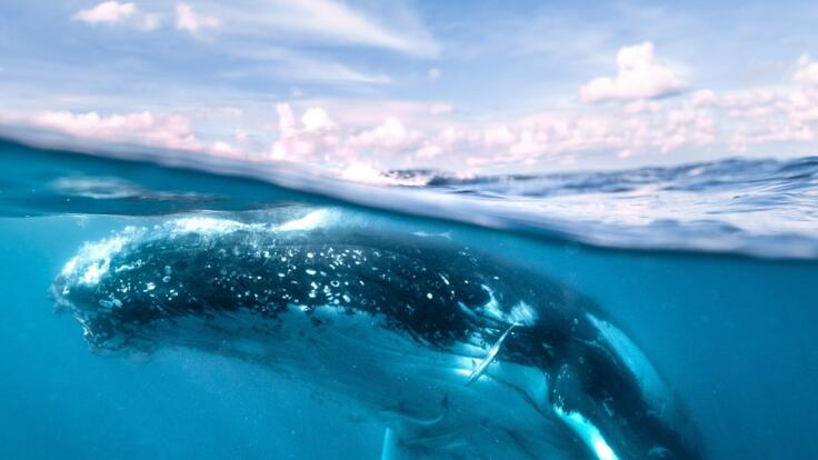Whale Watching tours on the Great Barrier Reef in Australia