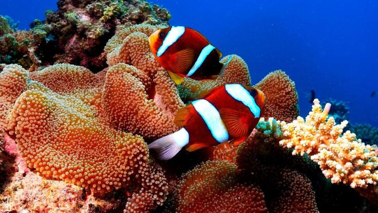 Coral and Reef Fish |  Townsville Snorkel and Dive Tour