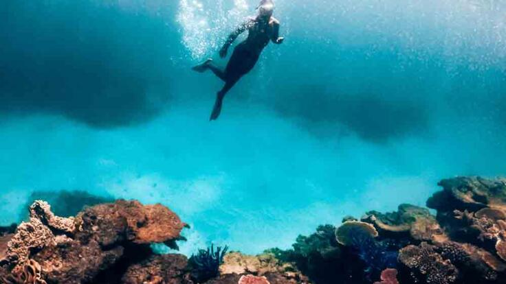 Dive & Snorkel Tours from Townsville & Magnetic Island - Museum of Underwater Art