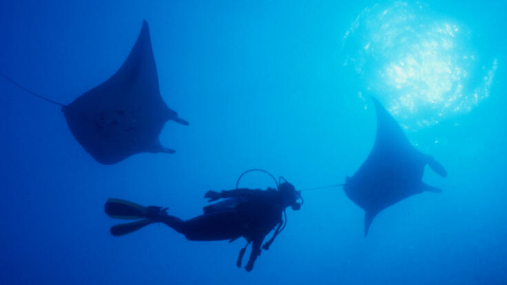 Charter Boats Townsville - Dive with Manta Rays on the Great Barrier Reef