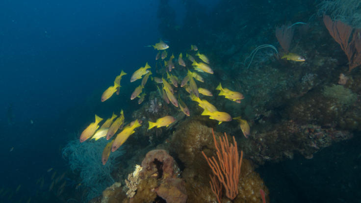 Reef Fish on dive the SS Yongala Wreck off Townsville and Magnetic Island