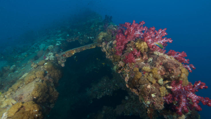 Dive the SS Yongala Wreck off Townsville and Magnetic Island