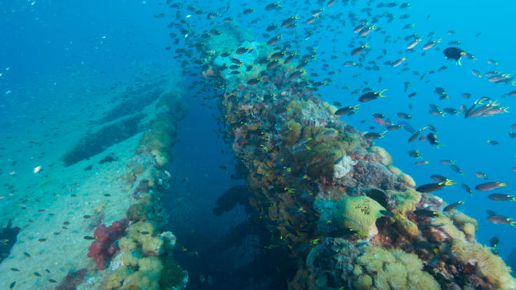 Abundance of sea life at SS Yongala Wreck Townsville