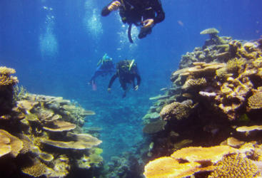 Snorkel and Dive tours from Townsville to Lodestone Reef