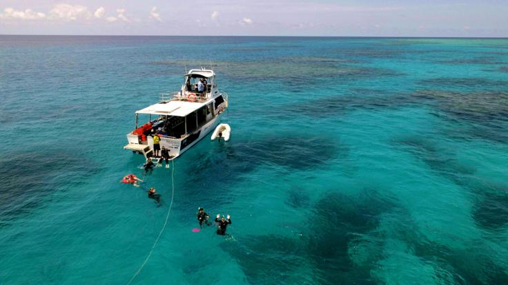 Snorkel and dive directly from the boat