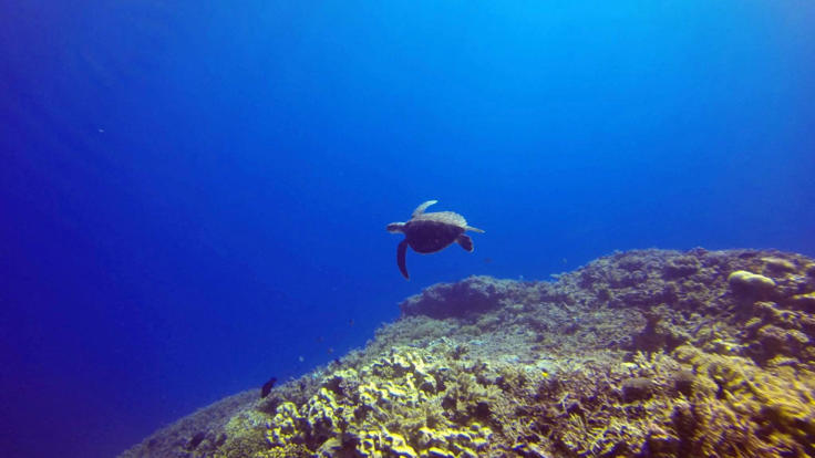 Swim with sea turtles |Liveaboard dive tour from Townsville