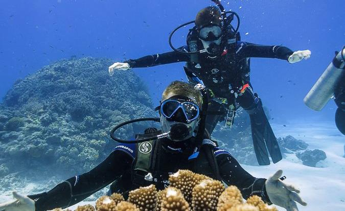 Up to 5 dives on the Great Barrier Reef