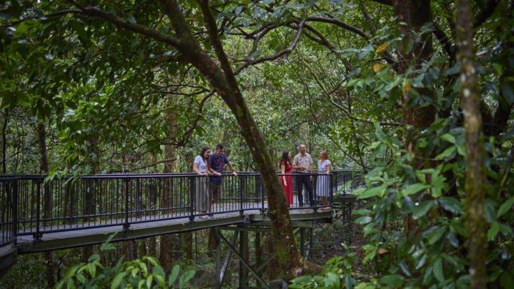 Mossman Gorge Guided Rainforest Walk