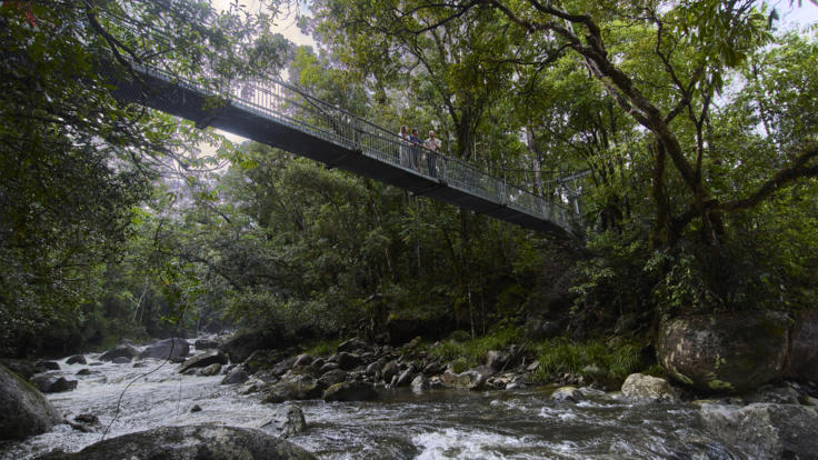 1 Day Daintree Dreaming Tour Includes Mossman Gorge