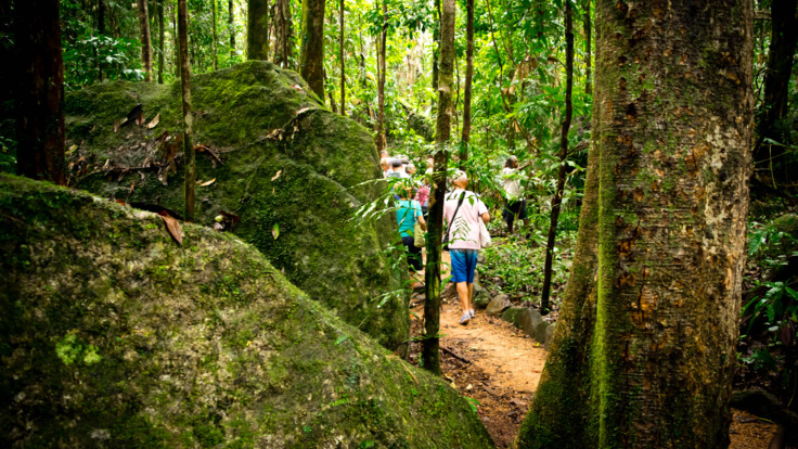 Travel through the Daintree Rainforest on your way to Cooktown