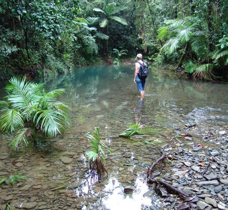 Freshwater Creek in the Daintree