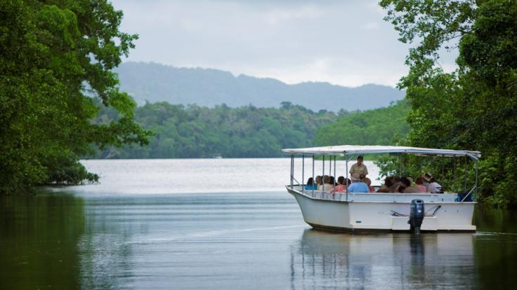 1 Hour Daintree River Cruise | Extended Cooktown Trip