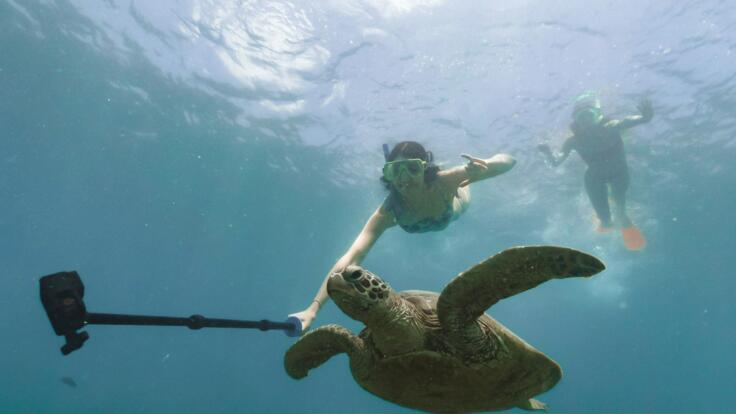 Airlie Beach Dive Boats - Swim with Turtles