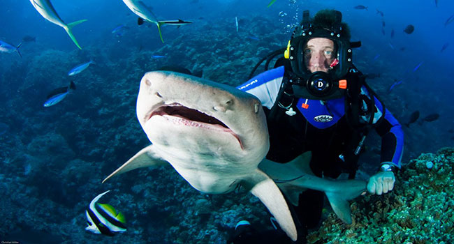 Dive With Sharks Great Barrier Reef - Yacht Charter Great Barrier Reef