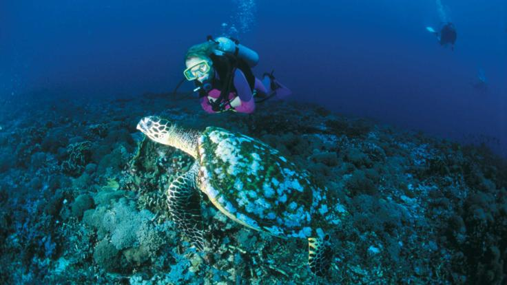 Scuba dive with turtles Great Barrier Reef