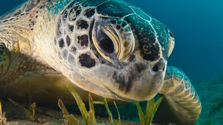 Gorgeous turtles abound on the Great Barrier Reef