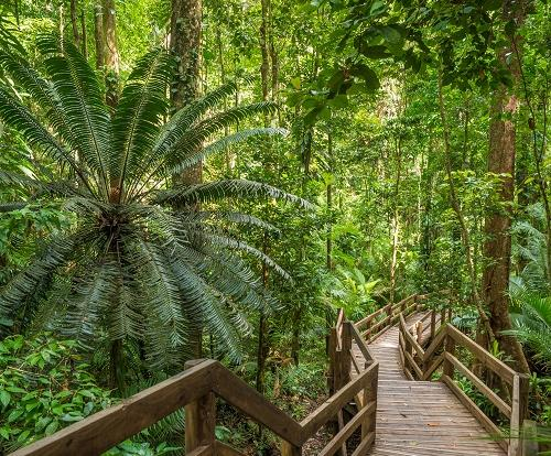 Jindalba Boardwalk - Daintree Rainforest Tour