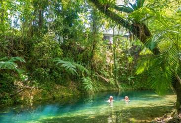 Enjoy a freshwater swim in the Daintree Rainforest