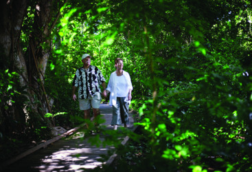 Rainforest boardwalk on Green Island, Tropical North Queensland