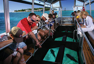 Glass bottom boat tour on the Great Barrier Reef