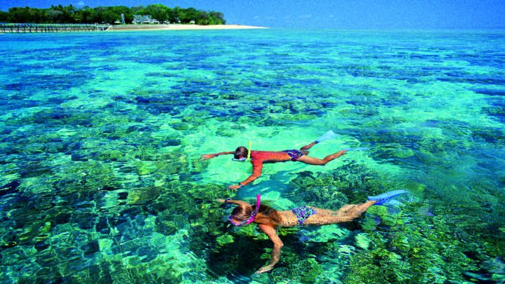Green Island Tours: Snorkelling at Green Island, Great Barrier Reef