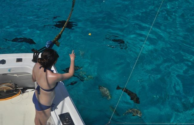 The fishing is easy on the Great Barrier Reef in Australia