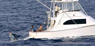 Cairns Charter Boat - Catching Marlin & Sailfish