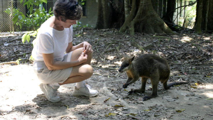 Hand Feed Kangaroo at lunch in the Daintree
