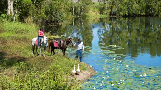 Cairns horse riding tours Yorkeys Knob - Farm billabong