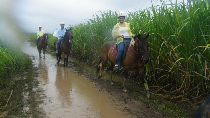 Horse riding between the sugar cane fields
