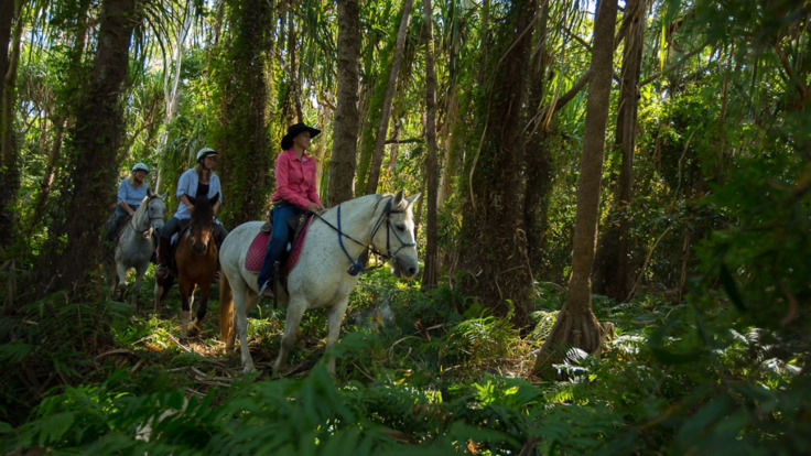 Enjoy horse riding in the bush in the northern beaches of Cairns