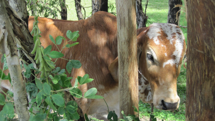 See the farm animals on your Cairns horseback riding tour