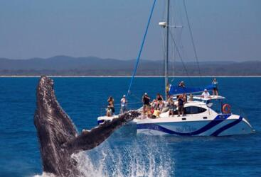 An experience of a lifetime - Hervey Bay Full Day Whale Watching & Sailing